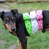Petflex Hundeverband elastisch 5cm x 4,5m blau