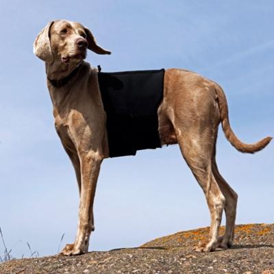Back on Track Hunderückenschoner