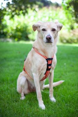 Brustpolsterung für Feltmann Hundegeschirre aus Neopren