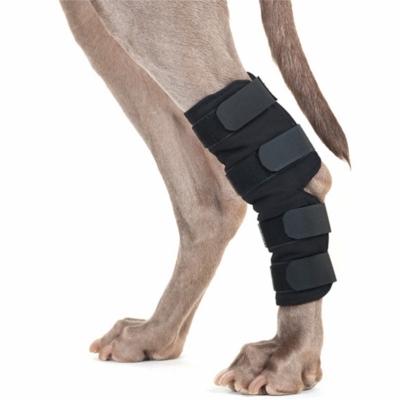 Hundesprunggelenkschoner