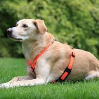 Polsterung für Feltmann Hundegeschirre